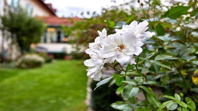 LInderhof Garten 640