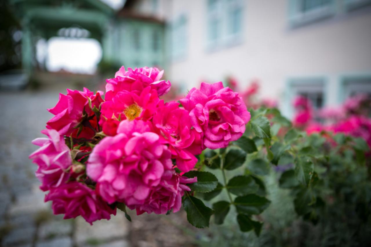 Sommer Thüringen
