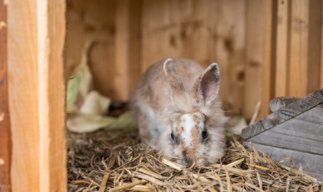 Kaninchen im LinderHof