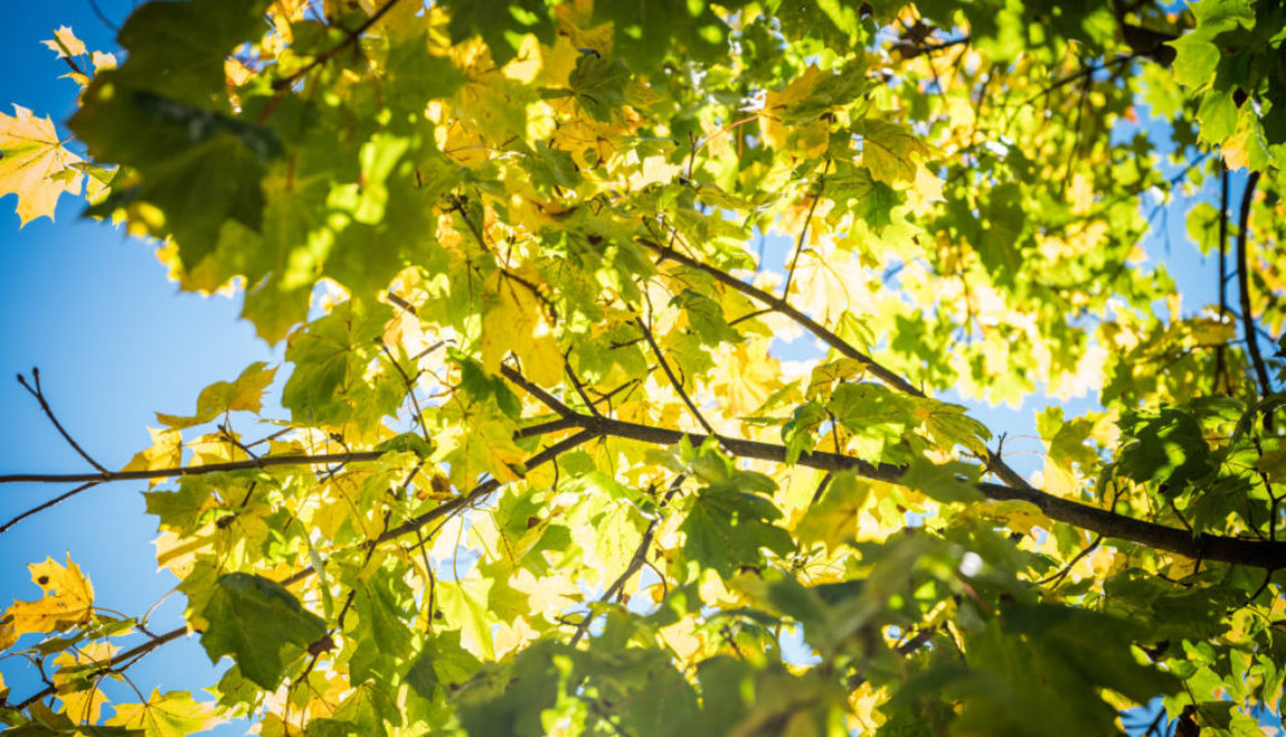 Herbst Erfurt